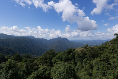 Rainforest, highways and Australian wildlife